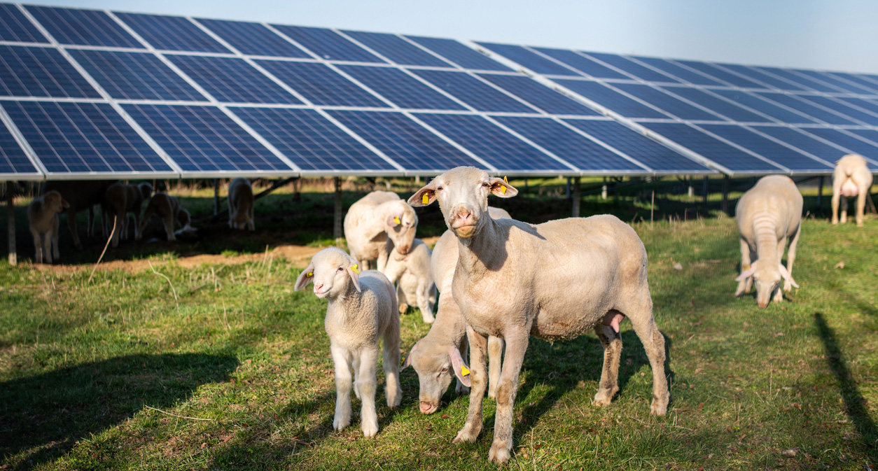 Solar Energy Helps Farms Withstand Economic Downturns
